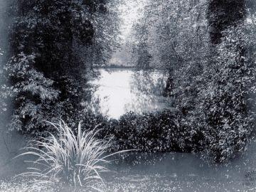 1911-Fish-Pondx6-1