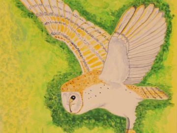 Graham-Holloway-Barn-Owl